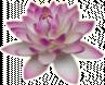 Pratjan thai massage eindhoven